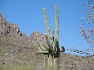 Never Ask Directions from Two Saguaros