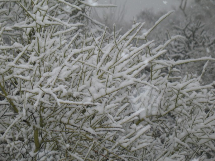 The large flakes pile high on wire thin palo verde sticks