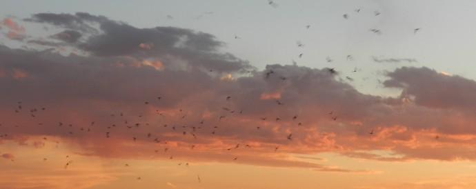 Bats at Dusk