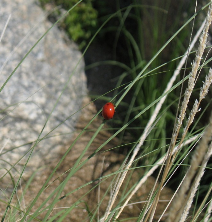 Lady Bug kind of Critter